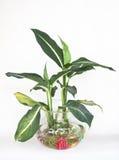 室内植物 免版税库存图片