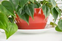 室内植物 图库摄影