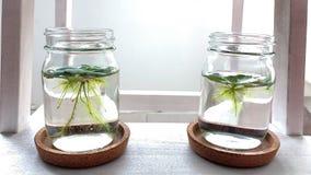 室内浮动植物 免版税图库摄影