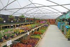 室内苗圃植物和花 免版税库存照片