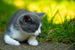 室外一只美丽的小的小猫的画象 库存照片