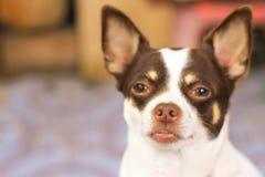 室外一条逗人喜爱的狗的画象 库存照片