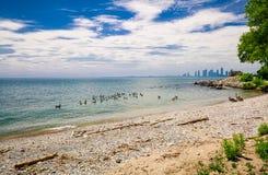 室外公园海滩好的看法在安大略湖附近的有坐在水中的许多鸟的 库存图片