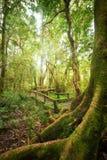 室外公园热带有薄雾的雨林风景  泰国 免版税图库摄影