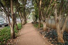 室外公园白天 库存图片