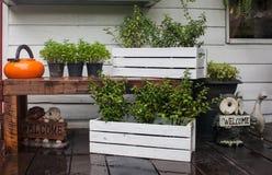 室外受欢迎的植物 免版税库存图片