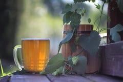 室外啤酒杯木的蛇麻草 免版税库存照片