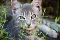 室外小的猫 库存照片