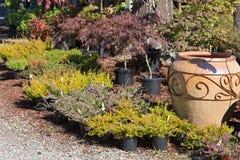 室外庭院苗圃 免版税库存照片