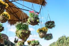 室外庭院设计与有蓝天的垂悬的花盆 库存照片
