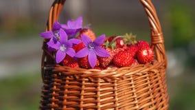 室外新鲜的草莓 库存照片