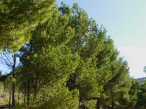室外树 库存图片