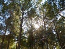 室外树 库存照片