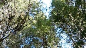 室外树 影视素材