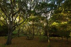 室外桌在高大的树木在顶部的森林树丛中部  免版税库存照片