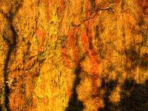 室外橙色湿石岩石墙壁的纹理背景  免版税图库摄影