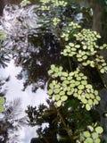 室外池塘 库存照片