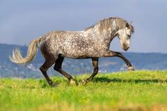室外灰色的马 免版税库存照片