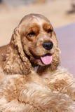 室外猎犬纵向 免版税库存图片