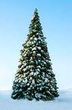 室外的圣诞树 库存图片