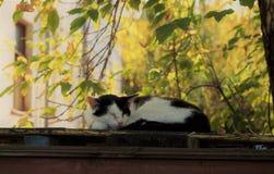 室外的猫 免版税库存照片