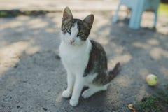 室外的猫 库存照片
