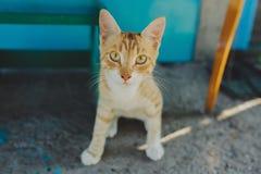 室外的猫 图库摄影