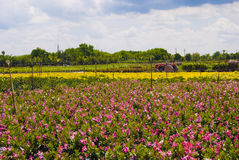 室外的苗圃 免版税库存照片