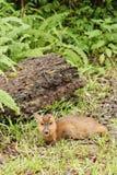 室外的鹿 库存照片