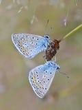 室外的蝴蝶 免版税图库摄影