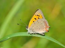 室外的蝴蝶 免版税库存图片
