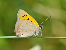 室外的蝴蝶 免版税库存照片
