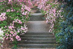 室外石楼梯卡拉维庭院乔治亚 免版税库存照片