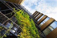 室外绿色生存墙壁,现代办公楼的垂直的庭院 免版税库存图片