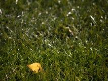 室外足球操场,可怜的草在与第一片五颜六色的叶子的季节结束时 图库摄影