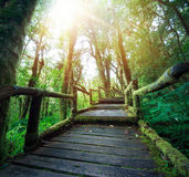 室外远足的自然痕迹在深绿森林里 免版税库存图片