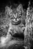 室外逗人喜爱的小猫 美丽的黑色纵向白人妇女 库存照片