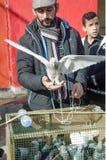 室外鸟市场在伊斯坦布尔 免版税库存照片