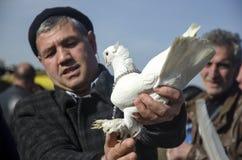 室外鸟市场在伊斯坦布尔 库存图片