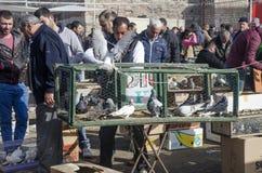 室外鸟市场在伊斯坦布尔 免版税库存图片