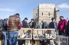 室外鸟市场在伊斯坦布尔 库存照片