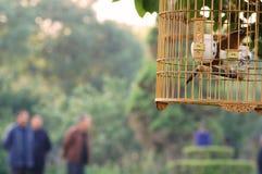 室外鸟笼 免版税库存照片