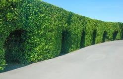 室外绿色树庭院的风景 免版税库存照片