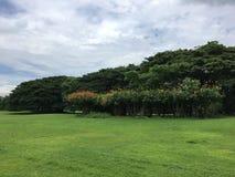 室外绿色的公园 免版税库存照片