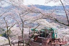 宫城,日本- 2017年4月13日:游人倾斜通过汽车通行证 库存照片