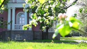 宫殿庭院在夏天城市 影视素材