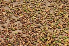 宰割的椰子 免版税库存照片