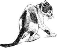 害怕小小猫 免版税库存图片