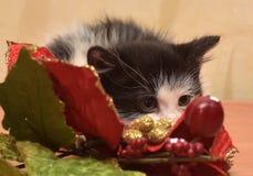 害怕小猫 免版税库存图片