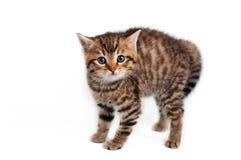 害怕的小猫 免版税库存照片